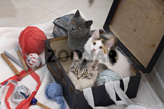 Three Kittens Sitting In An Old Suitcase