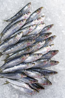 Raw sardine on ice offered as top view