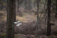The last leaves to a tree in an autumn forest