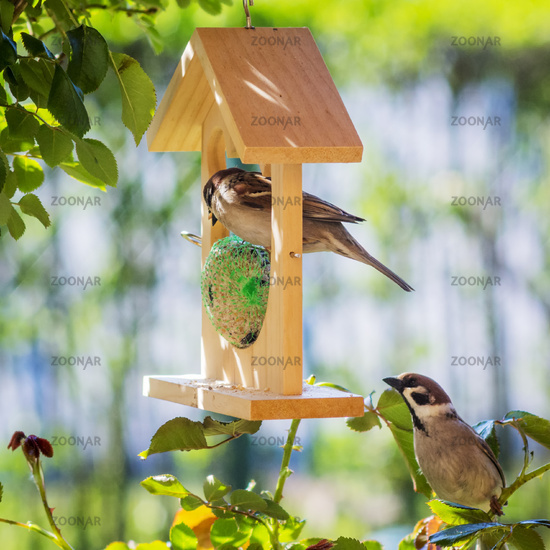 Sparrows at a feeder