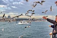 People feeding seagulls in Üsküdar