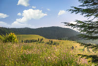 Summer nature with  forested mountains and blooming plains