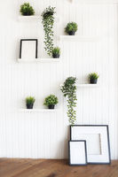 Green plants on white shelves on white wall
