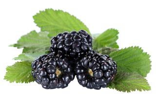 Brombeere Brombeeren Beeren Beere Frucht Früchte Blätter Freisteller freigestellt isoliert