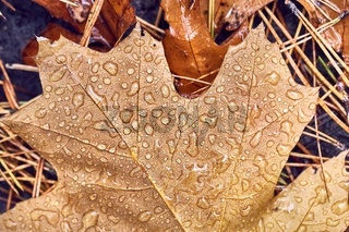 Autumn leaf on ground with raindrops