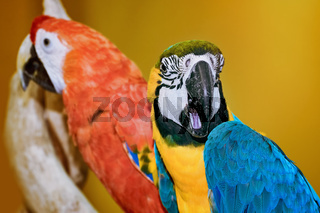 The Macaw Parrots