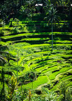 Tegalalang rice terraces in Bali, Indonesia