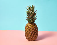 Ripe pineapple isolated on a blue pink paper background. Exotic Fruit