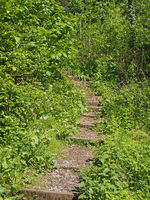 steps on a curved narrow path surrounded by bright green sunlit vegetation leading in dense woodland