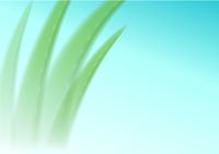 Aloe vera blurred on a blue background. Editable Background for cosmetics advertising, banner, catalog or poster