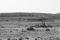Stone desert in black and white