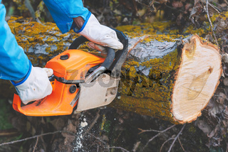 Close up of a lumberjack cutting old wood with a chainsaw.
