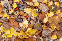 top view of wet various fallen leaves in late fall