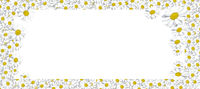Flowers composition. Frame made of Daisys background. Flat lay, top view, square, copy space, layout background space for text