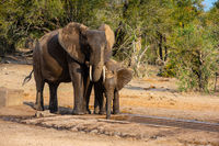 Elephants family with cute baby