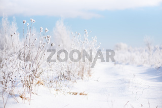 Snowy way and plants, nature in winter
