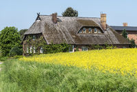 thatched-roof house