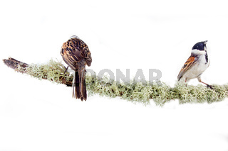 Artistic composition of two beautiful colorful birds on branch