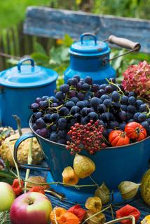 Farbenfrohe Erntezeit