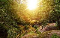 Sonniger Wald im Sommer mit Felsen in Huelgoat
