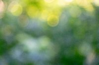 Bokeh background. Blurred green natural background of green foliage