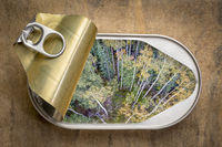 fresh forest landscape in open tin can