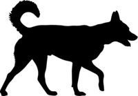 Shepherd dog silhouette on a white background