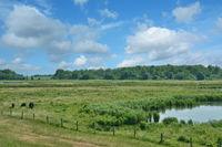 im Naturschutzgebiet Katinger Watt auf der Halbinsel Eiderstedt,Nordfriesland,Deutschland