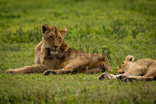 Lioness lying on grass looks at another