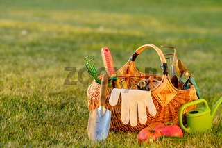 Gardening tools in basket and watering can on grass. Freshly harvested tomatoes, organic food concept.