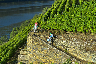 Arbeiter im Weinberg Höllen-Tal, Weingut Quinta de la Rosa, Pinhao, Douro Tal, Portugal
