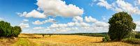 Idyllische Landschaft mit Feld und Himmel im Sommer