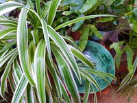 Various house plants close-up, home gardening collection