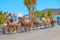A string of mules in Santorini