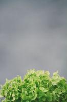 close up of a hydrangea flower
