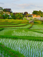 Villa Bali rice fields Indonesia