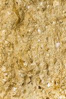 Sandstein mit Muscheleinschlüssen