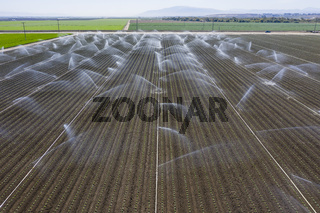 Aerial View Of Workers In A Field Harvesting Crops For Consumers