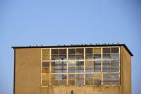 Vögel auf dem Turm eines Stauwehrs