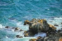 Cormorants on the stone