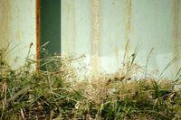 Gräser und Kräuter vor verrosteten Container