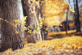 Autumn nature. Leaves and bushes with the yellow leaves in the p