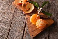 Closeup of a fresh peeled Minneola Tangelo on cutting board with knife and orange blossoms