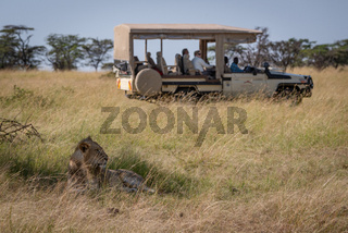 Lion lying in shade with truck behind