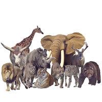 Wild mammals on white background