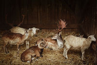 Animals in the barn