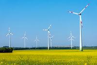 Blühendes Rapsfeld mit Windkraftanlagen