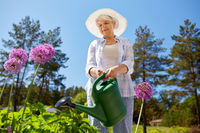 senior woman watering flowers at summer garden