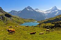 Bachalpsee und die Gipfel Wetterhorn und Schreckhorn