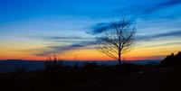 Sunset under the trees. Nature sunset background.